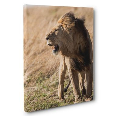 Custom Made Roaring Lion Photography Canvas Wall Art