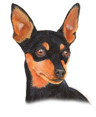 Custom Made Miniature Pinscher