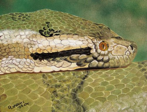Custom Made Green Anaconda Snake Oil Painting
