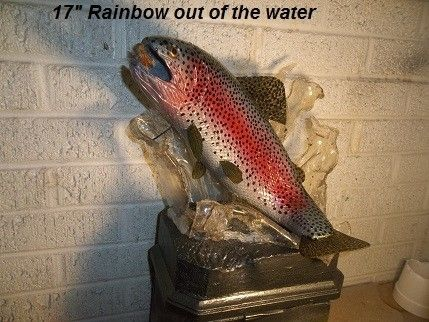 "Custom Made 17"" Rainbow Trout Breeching, Den, Cabin Decor"