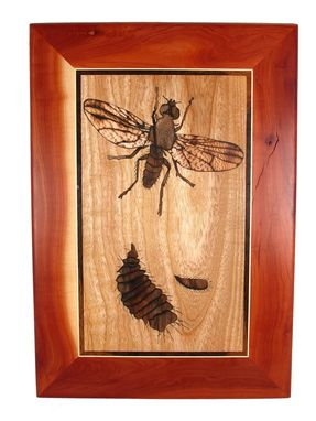 Custom Made Fruit Fly Life Cycle Wall Art