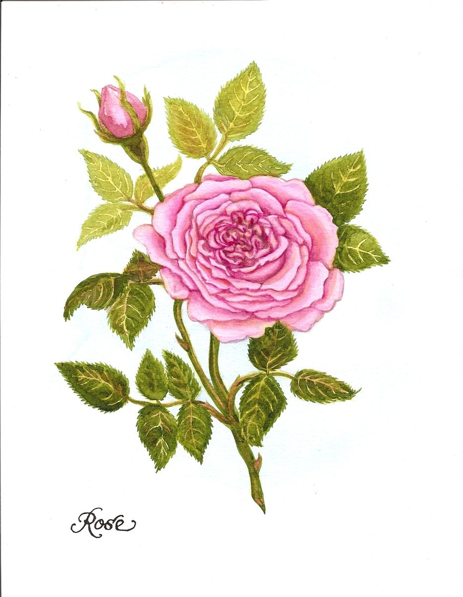 Hand Made Watercolor Painting Of A Pink Rose For June S