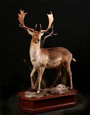 Custom Made Custom Taxidermy Pedestals