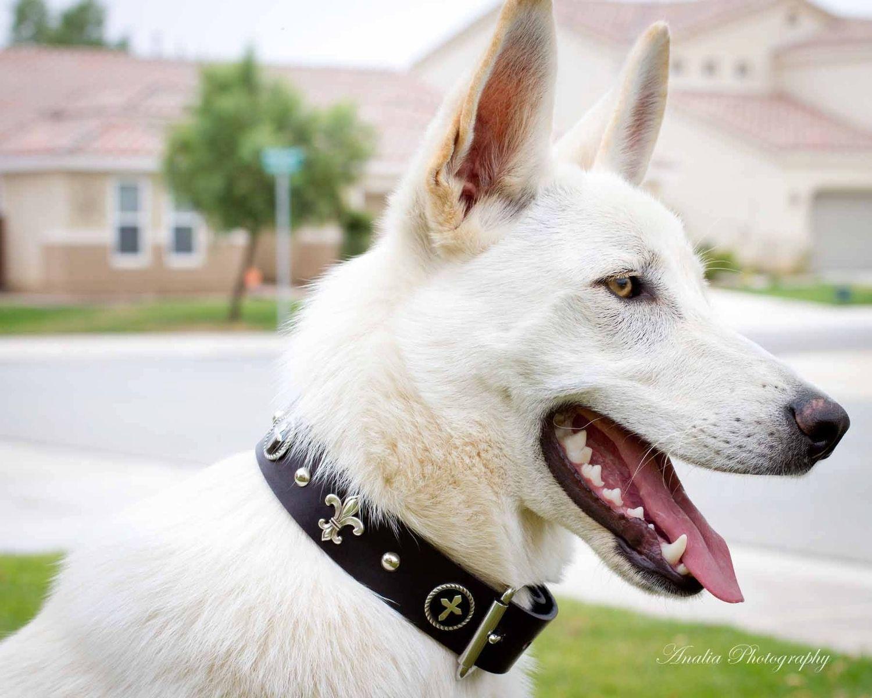 Custom Pet Collars   CustomMade.com