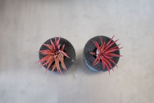 Custom Made Concrete Air Plant Containers - Set Of 2 - Air Plant Holder - Concrete Planter