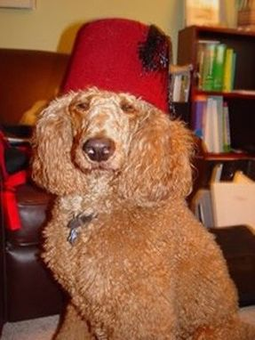 Custom Made Parker T Poodle, Our Mascot