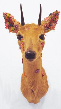 Custom Made Blooming Floral Duiker Taxidermy Mount
