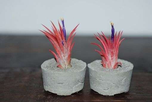 Custom Made Concrete Air Plant Containers - Set Of 2 - Air Plant Holder - Concrete Pot