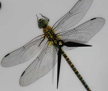 Custom Made Dragon Fly Wall Clock In White With Black Letters