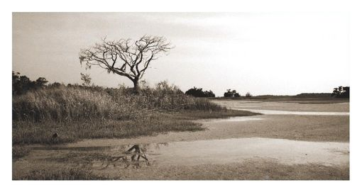 Custom Made Lowcountry Fine Art Photography