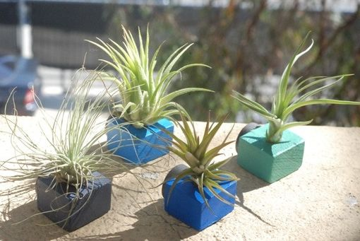 Custom Made Fun Bright Air Plant Magnets - Set Of 4 - Blue Air Plant Magnets