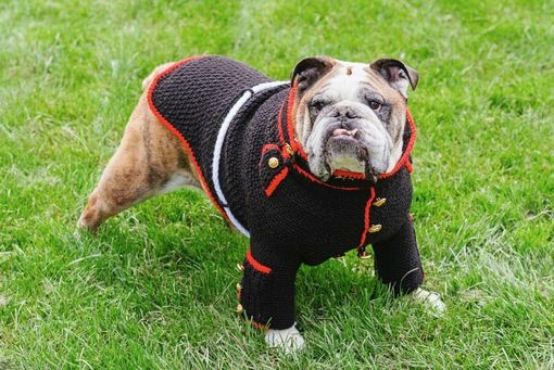Custom Made Marine Dog Uniform - Dog Sweater