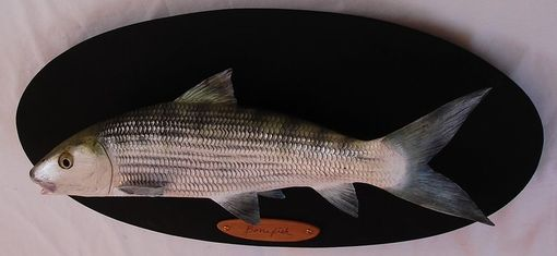 "Custom Made 26"" Hand-Carved Bonefish"