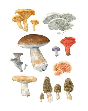 Custom Made Custom Mushroom Watercolor Painting