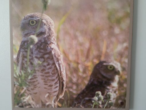 Custom Made Sw Florida Burrowing Owl