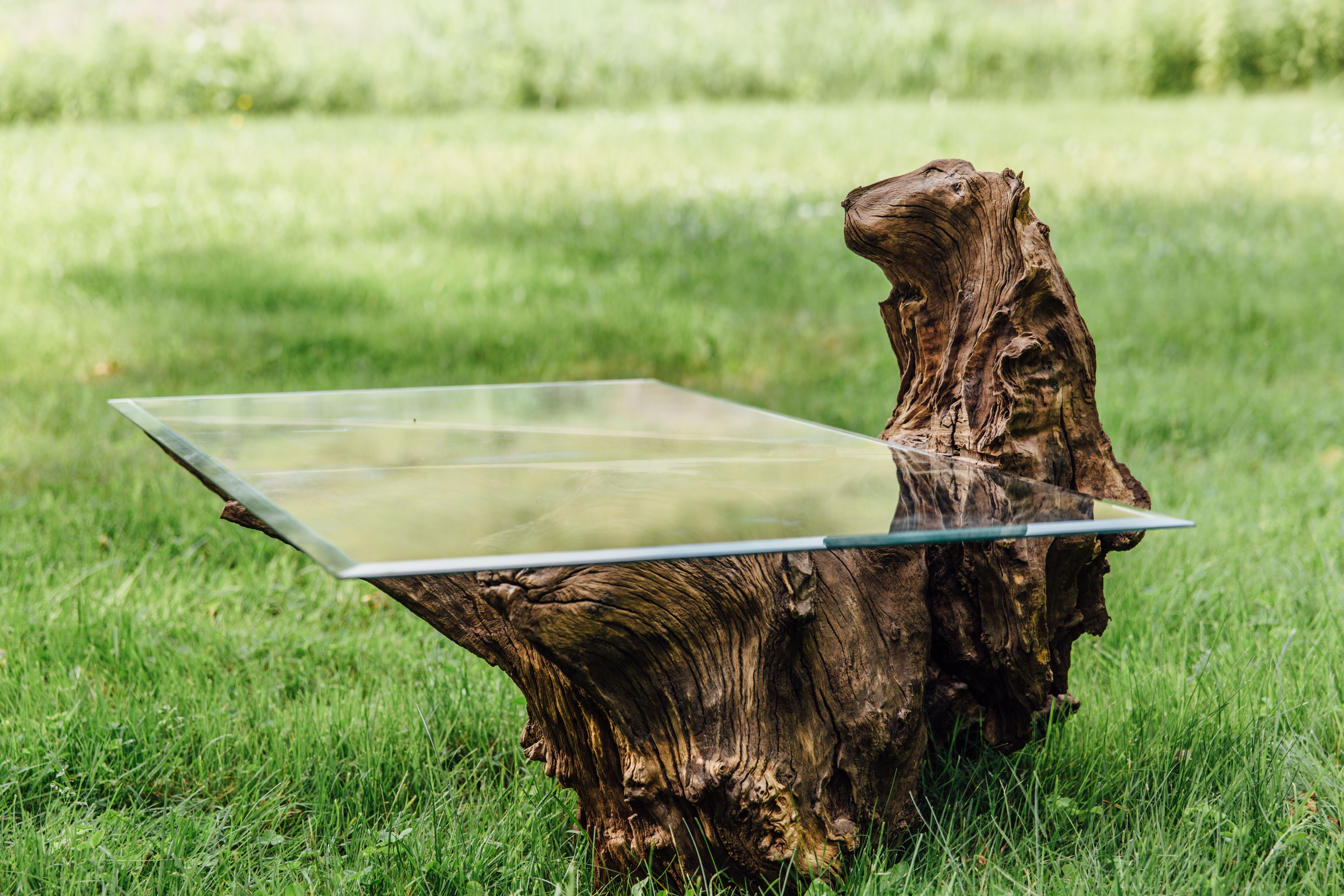 Custom Made Chestnut Oak Root Ball Coffee Table With Tempered Glass Top