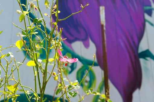 Custom Made Exterior Flower Mural Tribute To San Francisco, Herb Cain In Marin County Nyc Muralist