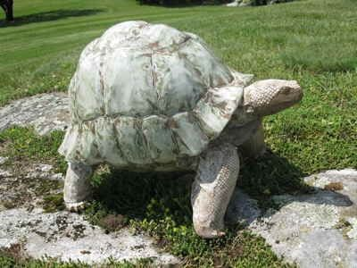 Custom Made Galapagos Tortoise