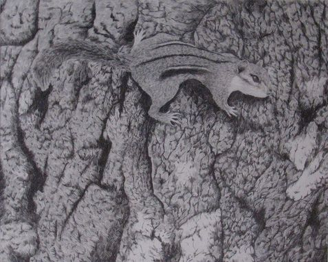 Custom Made Chipmunk. Pencil Drawing On Paper