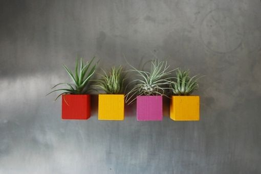 Custom Made Multicolor Bright Air Plant Magnets- Set Of 4 Magnets - Red, Yellow, And Fuschia Magnets