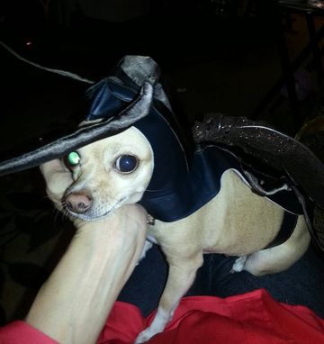 Custom Made Canine Roach Costume