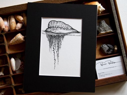 Custom Made Portuguese Man-Of-War, Modern Scientific Illustration With Black Mat Board