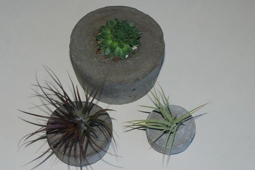 Custom Made Concrete Air Plant And Succulent Containers - Set Of 3 - Air Plant And Succulent Holder