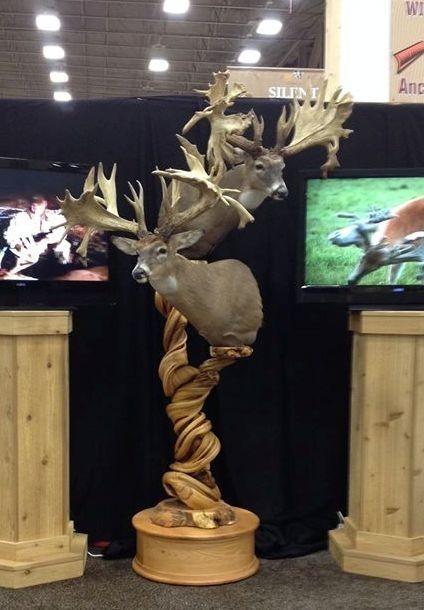 Handmade Double Head Juniper Taxidermy Display Pedestal By